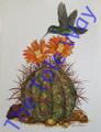 Hummingbird on Barrel Cactus (11x14)
