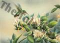 Hummingbird II (5x7)