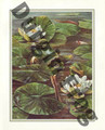 Durgin Frog in Lily Pond (8x10)
