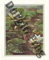 Durgin Frogs (8x10)
