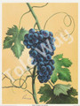 Blue Grapes by Reina (6x8)