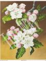 Apple Blossoms 362 (8x10)