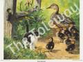 Duck Inspector (9x11)