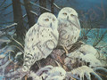 Snowy Owl II (8x10)