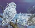 Snowy Owl (8x10)