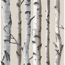 Birch Tar ( Caderecified ) Essential Oil