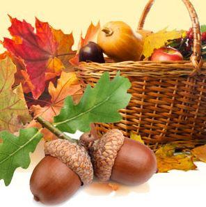 Acorn Harvest Fragrance Oil