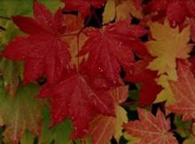 Autumn Rain Fragrance Oil - 1