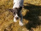 puppy-pic.jpg