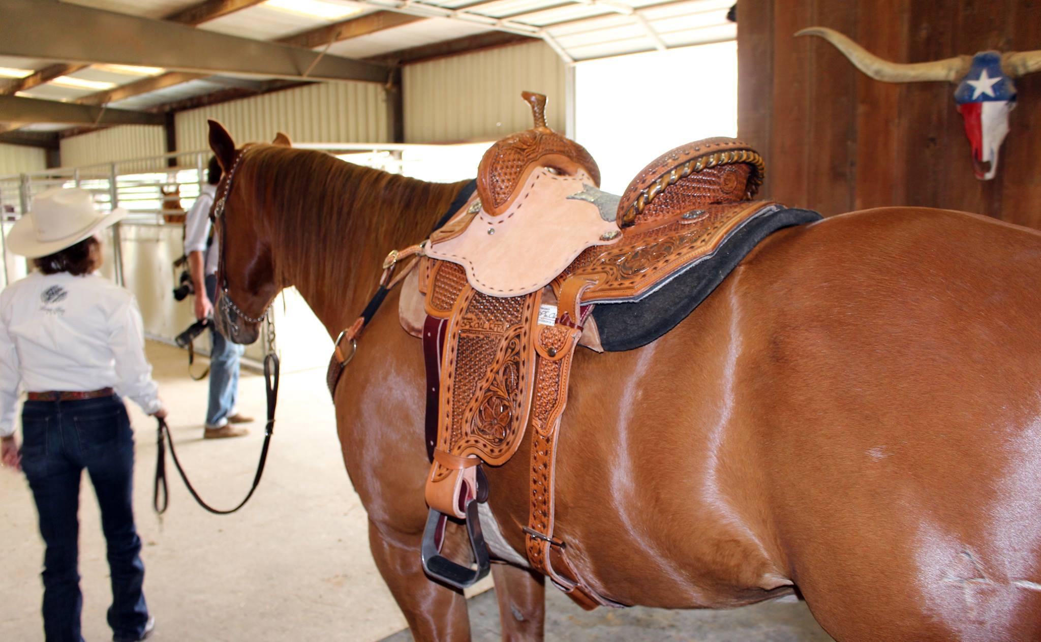 marlene-reinsman-saddle.jpg