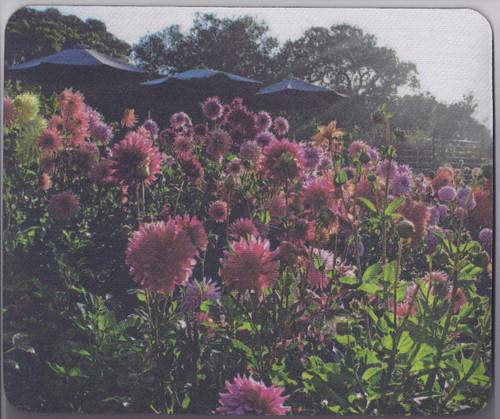 Mouse Pad- Dahlia field