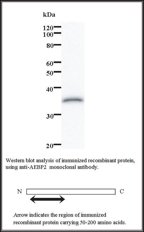 BMR00713 WB Data
