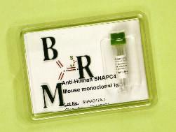 Anti-Human ABCF1
