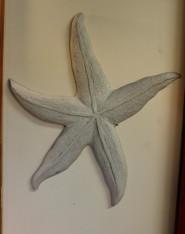 New Dancing Star Fish Stucco Art