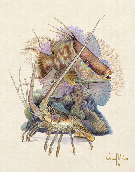 hogfish-lobster.jpg