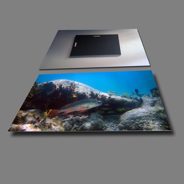 jason-mathias-metal-photo-prints-mutton-snapper.jpg