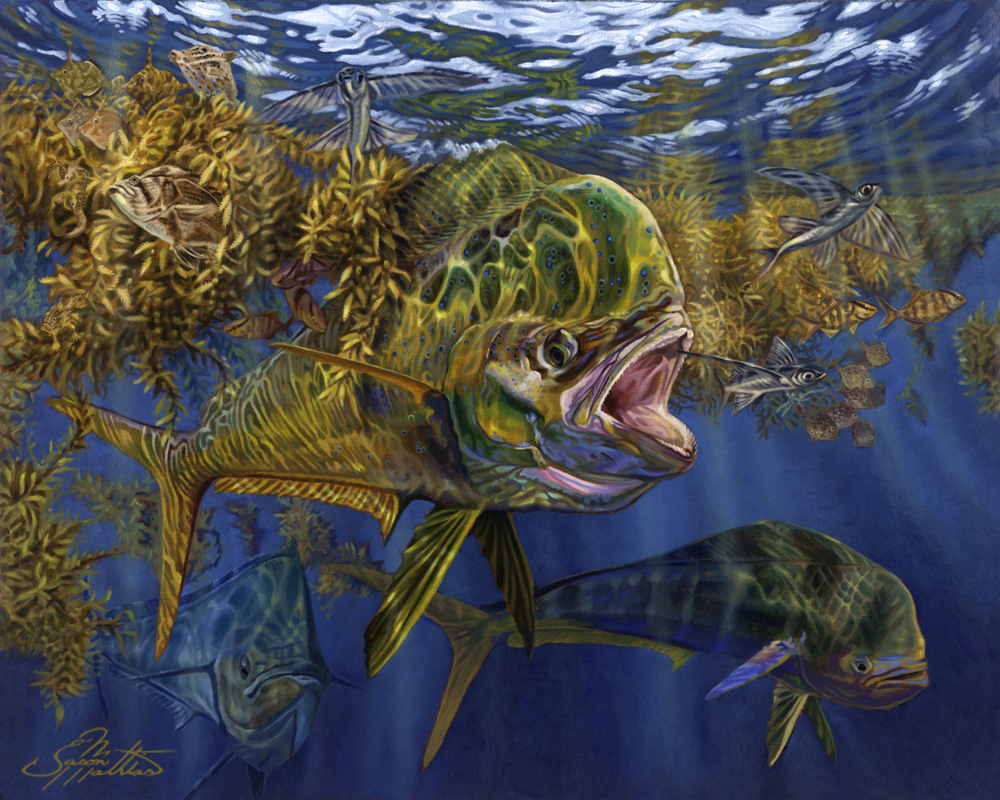mahi-dorado-dolphin-fish-art.jpg