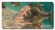 Jason Mathias Heavy Duty Aluminum Metal License Plates! Artwork of a Snook underwater is Featured in a Radiant Shiny High Gloss! A perfect gift for the avid fisherman who enjoys sportfishing, gamefish and art.