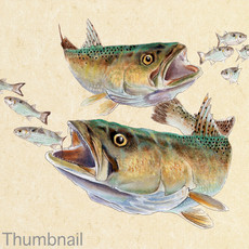 "(Original) ""Speckled Trout"" (Available)"