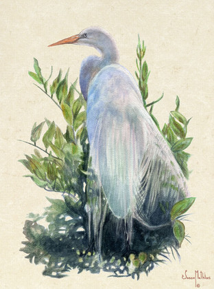 In this vision, skilled artist Jason Mathias masterfully portrays a beautiful White Herron posing for a portrait.