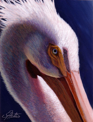 In this vision, skilled artist Jason Mathias masterfully portrays a beautiful close up of a White Pelican.