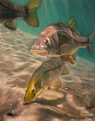 In this vision, renowned artist Jason Mathias portrays three sea-bright Snook as they glide over a sandy bottom inlet.  Printing: Jason Mathias fine art prints use professional fade resistant Giclee inks and a range of high quality papers and canvases resulting in beautiful, fully archival prints with incredibly fine detail. Giclée uses water-soluble pigments rather than the dye-based inks used in traditional printing and other forms of ink-jet. Giclée pigments match original pigment-based media and remain true without fade for over 75 years. The artist applies a texturing protective UV coating for all canvas prints only.