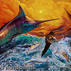 """Reflective Chaos"" (Blue Marlin and Tuna)"