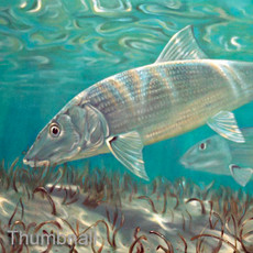 Ghost Flats (Bonefish)