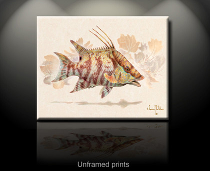 """Hogfish unframed prints"" by artist Jason Mathias masterfully portrays a Hogfish changing its patterns to blend into a lightly suggested reef."