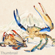 blue crab, art
