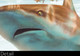 shark art
