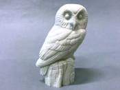 Study Cast - Owl, Saw-whet
