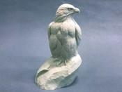 Study Cast - Eagle