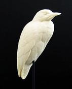 Study Cast - Heron, Black-crowned