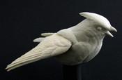 Study Cast - Waxwing, Cedar - open wing