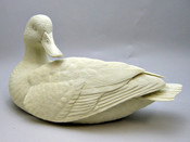 Study Cast - Black Duck