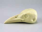 Study Bill - Crow