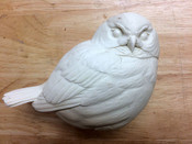 Study Cast - Pygmy Owl - puffy