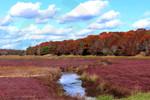 Photo - Cranberry Bogs