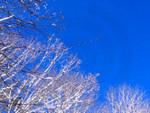 Photo - Snow Birds