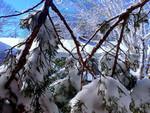 Photo - Snow Fall