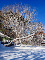 Photo - When It Snows