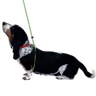 Body Harness Leash