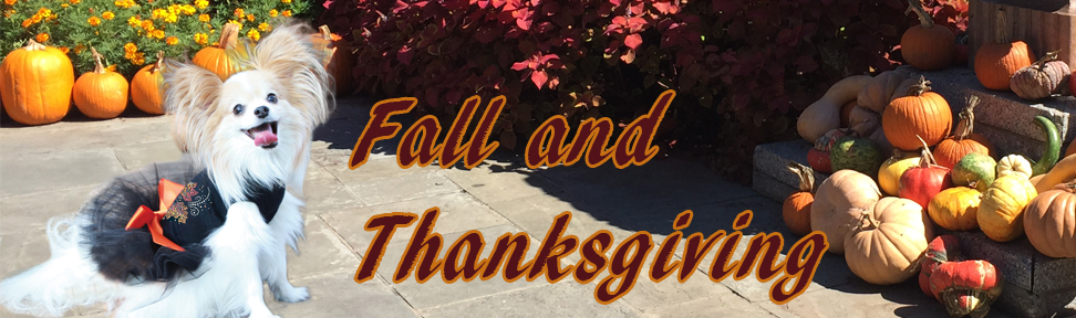 fall-and-thanksgiving-tutu-ben-copy.jpg