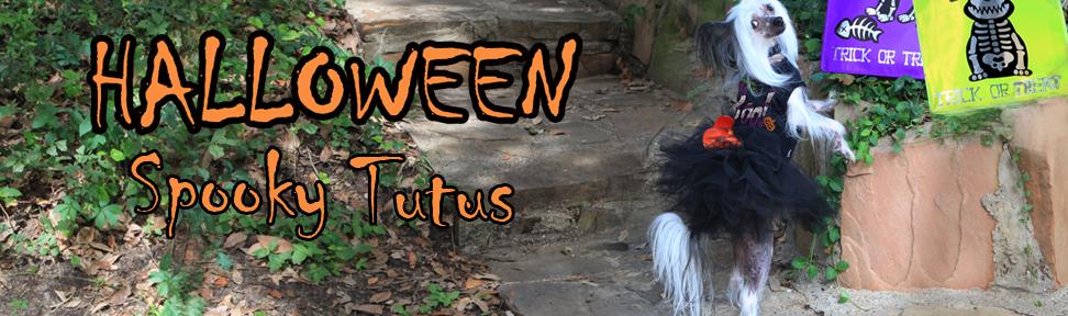 halloween-tutu-chinese-crested-copy.jpg
