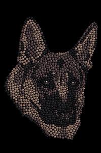 German Shepherd - Women's T-shirt