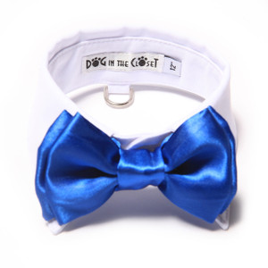 White shirt collar with royal blue bow tie.