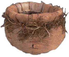"Cocotistis / wild roots jar planter 9""H Top diameter 9""D, Centre diameter 13""H"