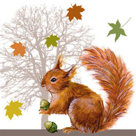 "Lunch napkins - Brown Squirrel 6.5""x6.5"""