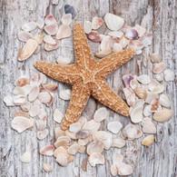 "Lunch Napkins - Shells & Starfish 6.5""x6.5"""